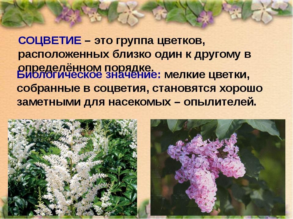 СОЦВЕТИЕ – это группа цветков, расположенных близко один к другому в определё...