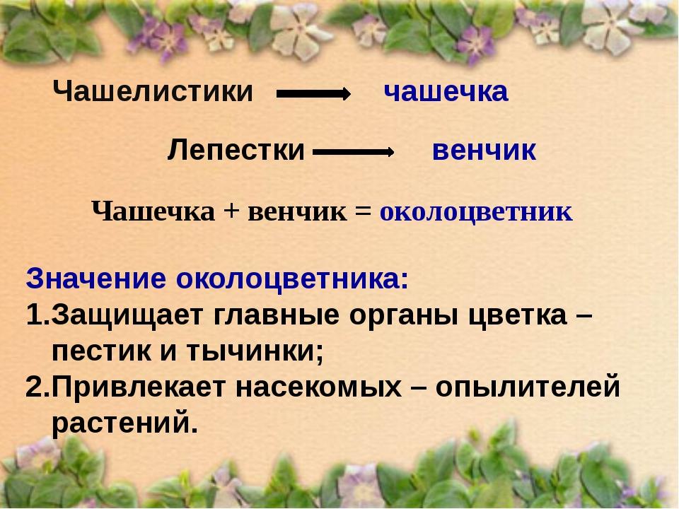 Чашелистики Чашечка + венчик = околоцветник чашечка Лепестки венчик Значение...