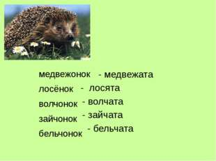 медвежонок лосёнок волчонок зайчонок бельчонок - медвежата - лосята - волчата