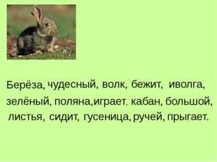 Берёза, чудесный, волк, бежит, иволга, зелёный, поляна, играет, кабан, большо
