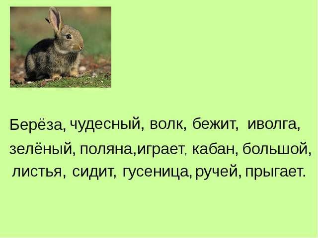 Берёза, чудесный, волк, бежит, иволга, зелёный, поляна, играет, кабан, большо...