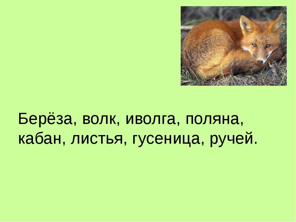 Берёза, волк, иволга, поляна, кабан, листья, гусеница, ручей.
