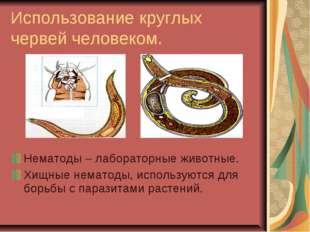 Использование круглых червей человеком. Нематоды – лабораторные животные. Хищ