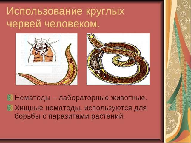 Использование круглых червей человеком. Нематоды – лабораторные животные. Хищ...