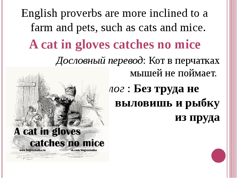English proverbs are more inclined to a farm and pets, such as cats and mice....