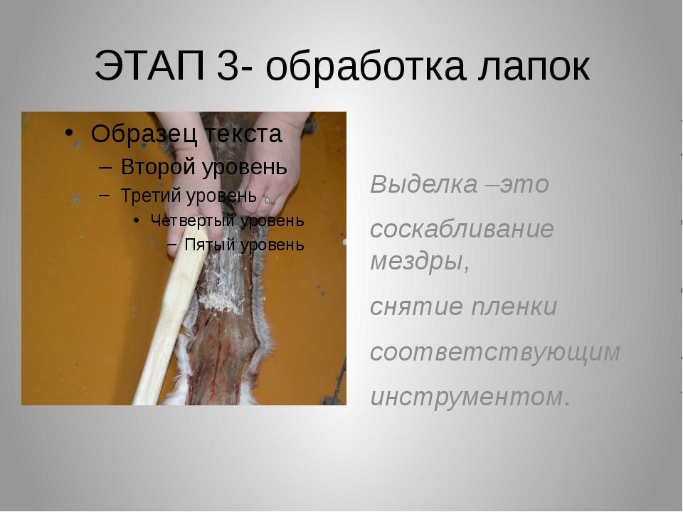 ЭТАП 3- обработка лапок Выделка –это соскабливание мездры, снятие пленки соот...