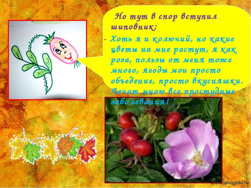 Но тут в спор вступил шиповник: - Хоть я и колючий, но какие цветы на мне ра...