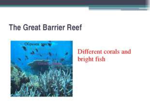 The Great Barrier Reef Different corals and bright fish