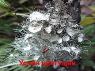 В Красную книгу России уже внесены многие редкие растения этих мест: Лещина д