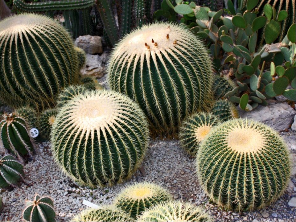 А это ялтинский Никитский ботанический сад в Крыму. Здесь собраны тысячи видо...