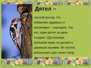 Дятел – лесной доктор. Он избавляет деревья от насекомых – короедов. Так вот,