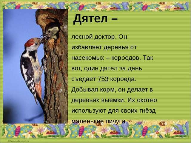Дятел – лесной доктор. Он избавляет деревья от насекомых – короедов. Так вот,...