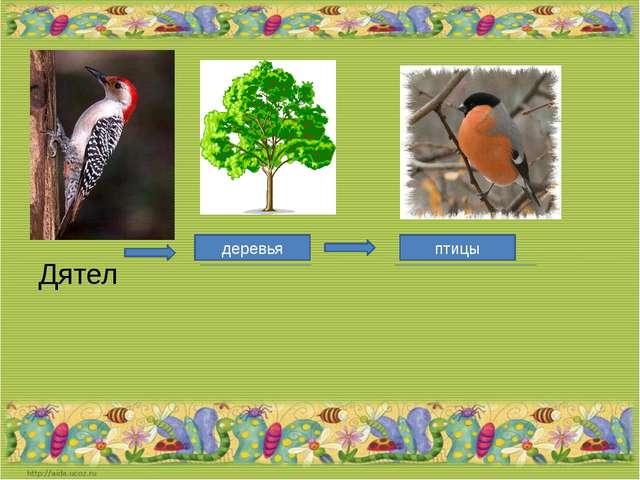 Дятел деревья птицы