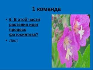 1 команда 6. В этой части растения идет процесс фотосинтеза? Лист
