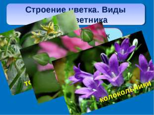 Строение цветка. Виды околоцветника двойным