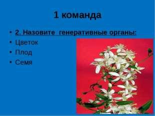 1 команда 2. Назовите генеративные органы: Цветок Плод Семя