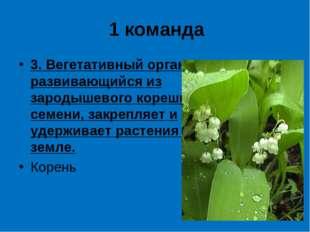 1 команда 3. Вегетативный орган, развивающийся из зародышевого корешка семени