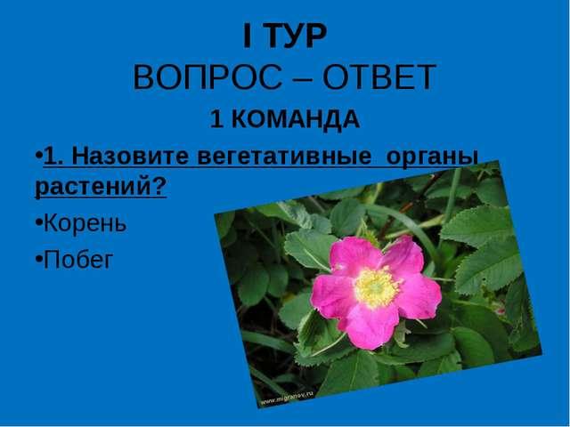 I ТУР ВОПРОС – ОТВЕТ 1 КОМАНДА 1. Назовите вегетативные органы растений? Коре...
