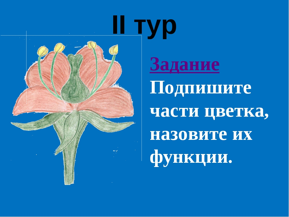 II тур Задание Подпишите части цветка, назовите их функции.