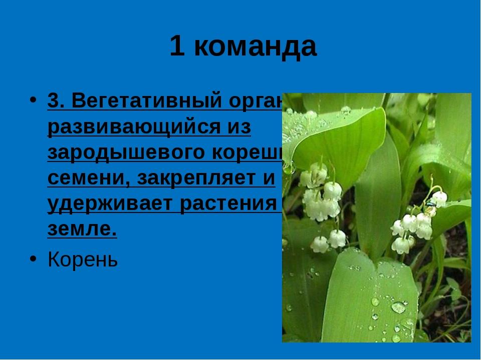1 команда 3. Вегетативный орган, развивающийся из зародышевого корешка семени...