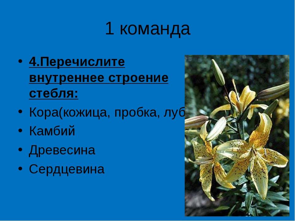 1 команда 4.Перечислите внутреннее строение стебля: Кора(кожица, пробка, луб)...