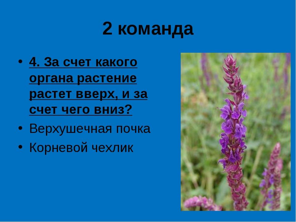 2 команда 4. За счет какого органа растение растет вверх, и за счет чего вниз...