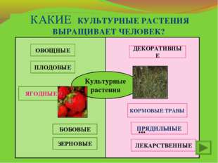 Культурные растения ОВОЩНЫЕ ПЛОДОВЫЕ БОБОВЫЕ ЯГОДНЫЕ ЗЕРНОВЫЕ ДЕКОРАТИВНЫЕ ЛЕ