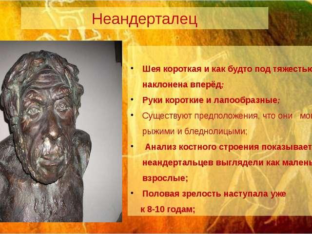 Неандерталец Шея короткая и как будто под тяжестью головы наклонена вперёд; Р...