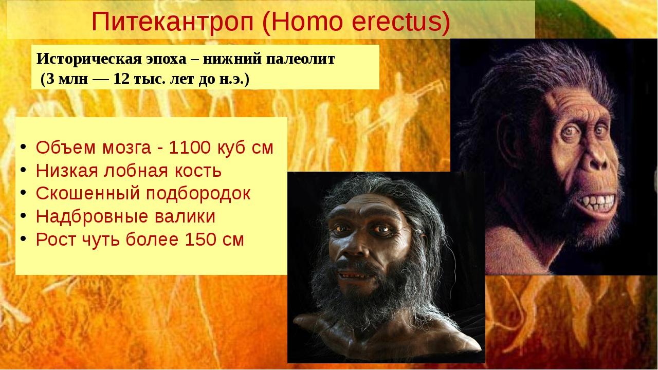 Питекантроп (Homo erectus) Историческая эпоха – нижний палеолит (3 млн — 12 т...