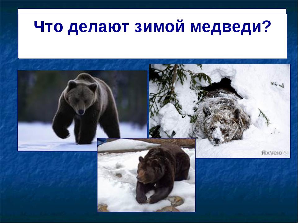 """Презентация по развитию речи на тему """" Жизнь зверей зимой"""" (3 класс)"""