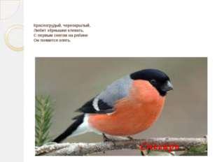 Красногрудый, чернокрылый, Любит зёрнышки клевать, С первым снегом на рябине