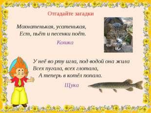 Отгадайте загадки Мохнатенькая, усатенькая, Ест, пьёт и песенки поёт. Кошка У