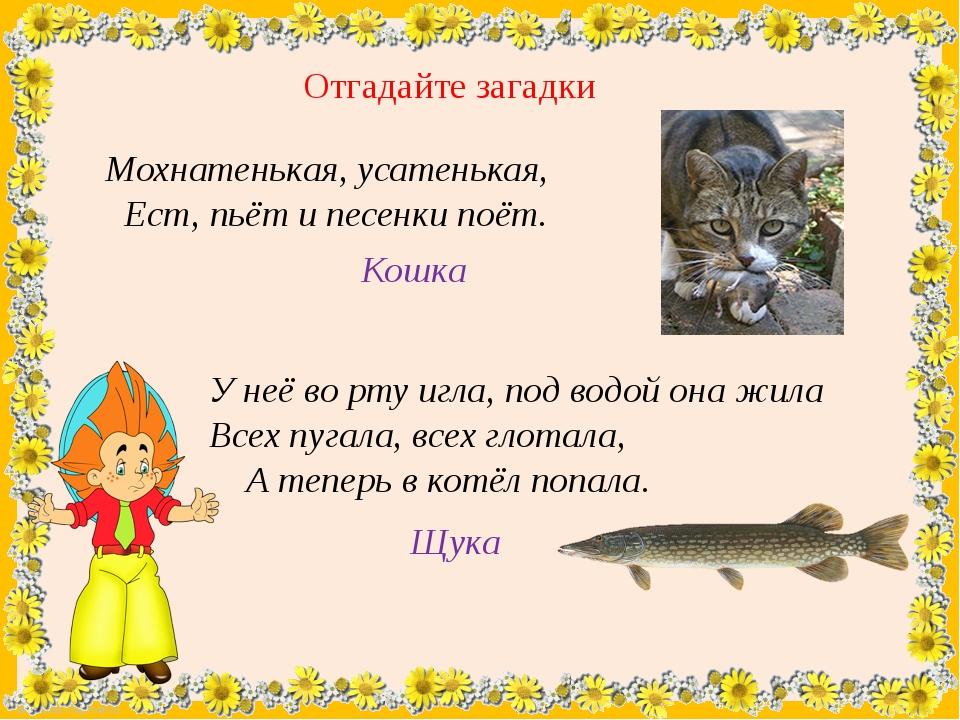Отгадайте загадки Мохнатенькая, усатенькая, Ест, пьёт и песенки поёт. Кошка У...