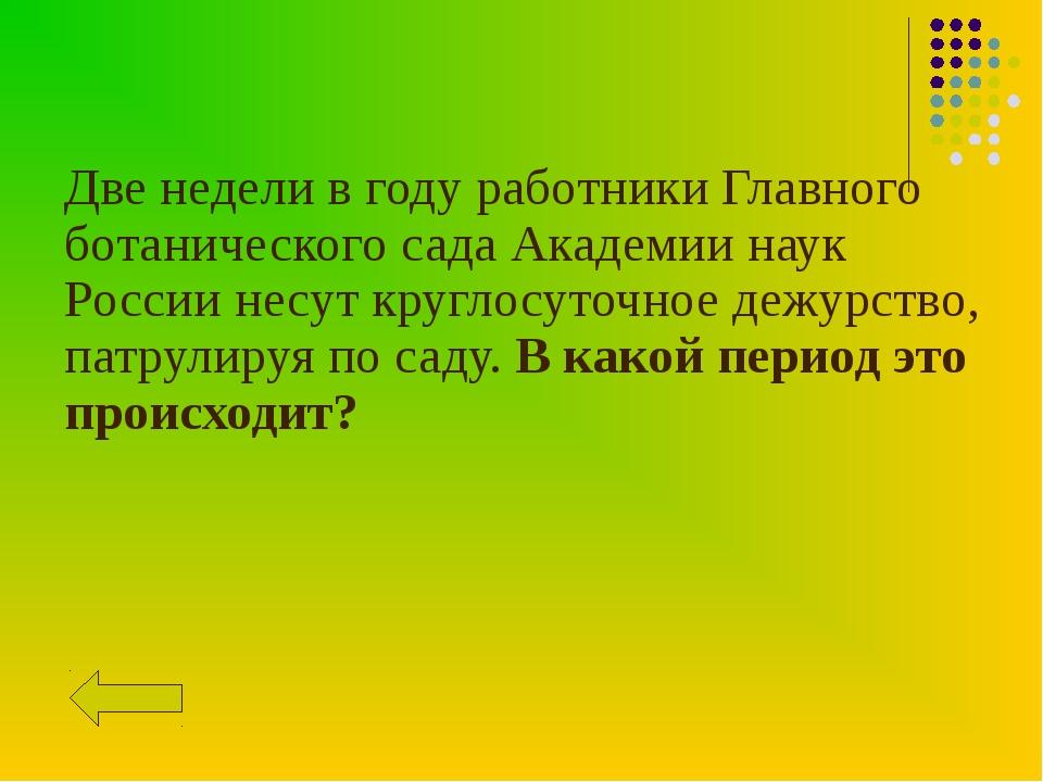 Две недели в году работники Главного ботанического сада Академии наук России...