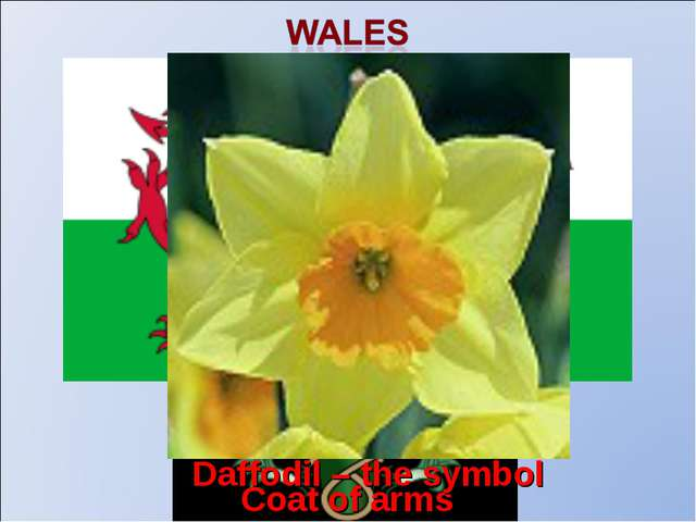 Coat of arms The flag Daffodil – the symbol