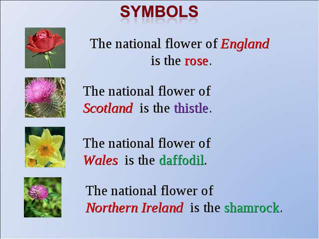 The national flower of England is the rose. The national flower of Scotland i...