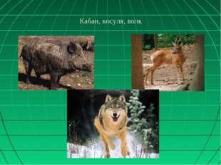Кабан, косуля, волк