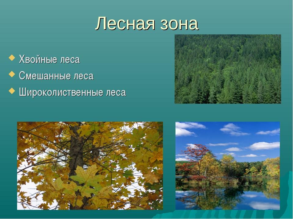 Лесная зона Хвойные леса Смешанные леса Широколиственные леса