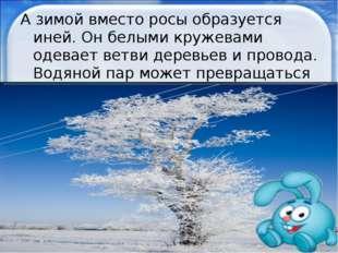А зимой вместо росы образуется иней. Он белыми кружевами одевает ветви деревь