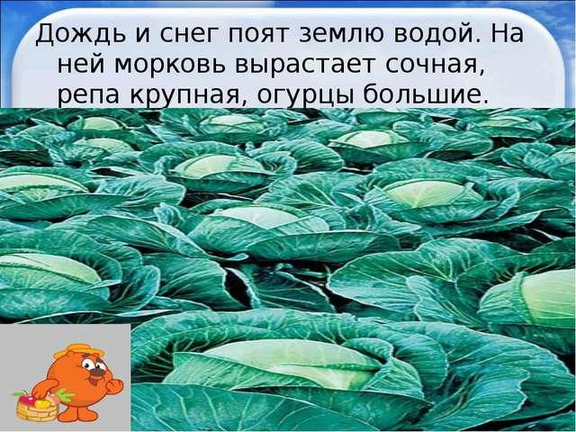 Дождь и снег поят землю водой. На ней морковь вырастает сочная, репа крупная,...