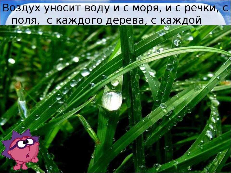 Воздух уносит воду и с моря, и с речки, с поля, с каждого дерева, с каждой тр...