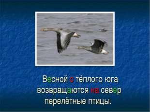 Весной с тёплого юга возвращаются на север перелётные птицы.