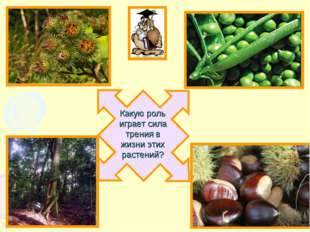 Какую роль играет сила трения в жизни этих растений?