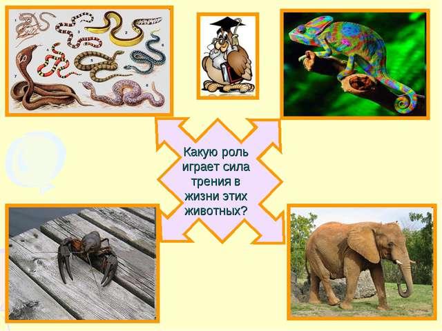 Какую роль играет сила трения в жизни этих животных?