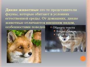 Дикие животные это те представители фауны, которые обитают в условиях естеств
