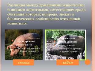 Различия между домашними животными и дикими животными, естественная среда оби