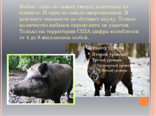 Кабан - одно из самых умных животных на планете. И одно из самых смертоносных