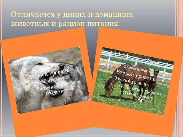 Отличается у диких и домашних животных и рацион питания