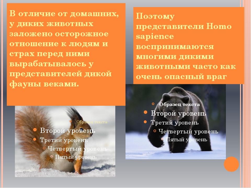 В отличие от домашних, у диких животных заложено осторожное отношение к людя...