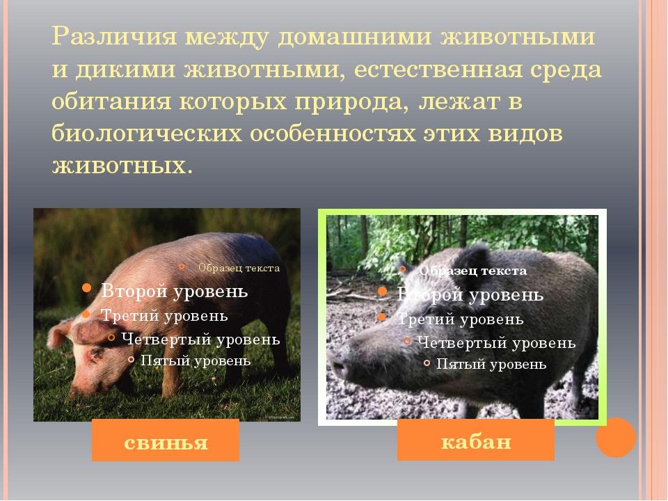 Различия между домашними животными и дикими животными, естественная среда оби...